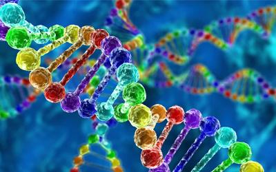 Нарушения могут передаваться на генетическом уровне - Лето