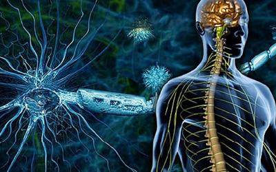 Исследование функций нервной системы - Лето