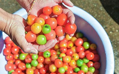 Включить в рацион достаточно овощей, фруктов - Лето